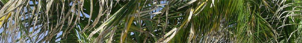 EVALSO header image 3